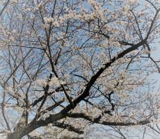 春だねぇ~、そだねぇ~。