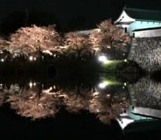 今年の桜????福岡