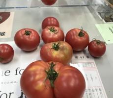 雲仙のトマト。