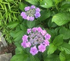 紫陽花と熟美?女3人ー後編ー
