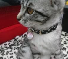 愛猫・うずまきの家族に教えられて