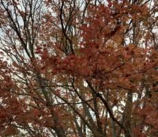 秋も終わりというのに。