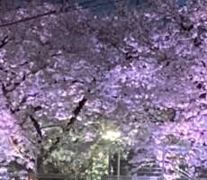 嬉しい小当たりと最後の桜